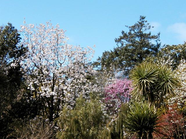 Magnolia view @ Trewidden