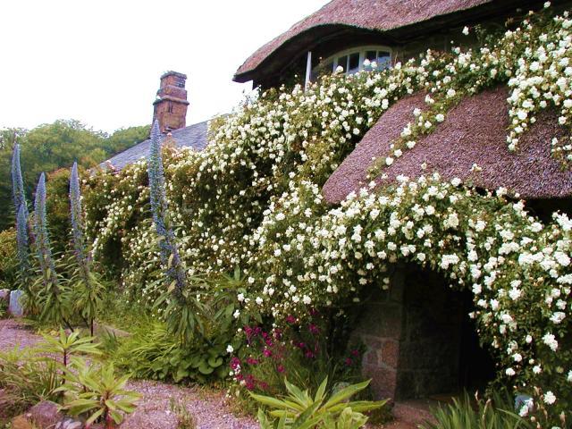 Cottage @ Penberth