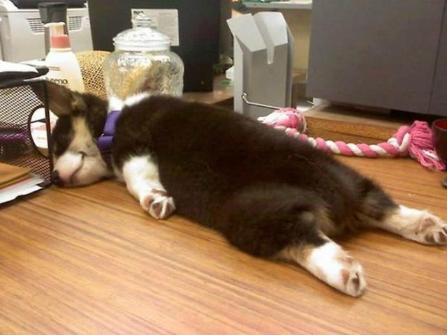 Tiredness...